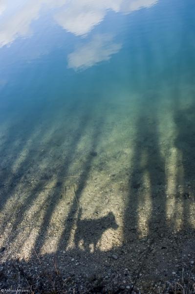 Reflection Dog